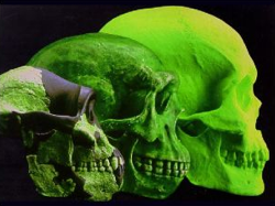 brain-evolution